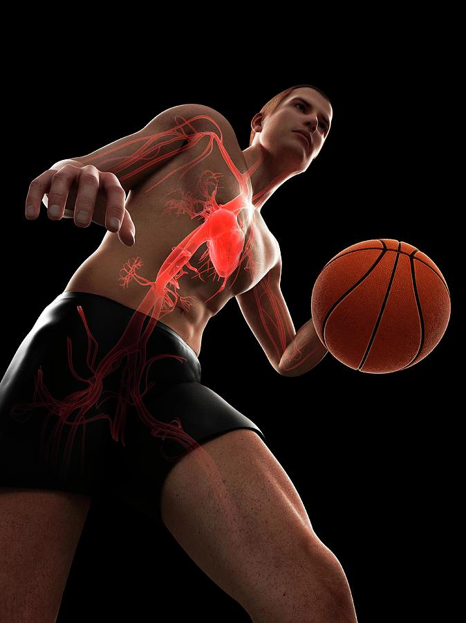 Artwork Photograph - Basketball Player by Sciepro/science Photo Library