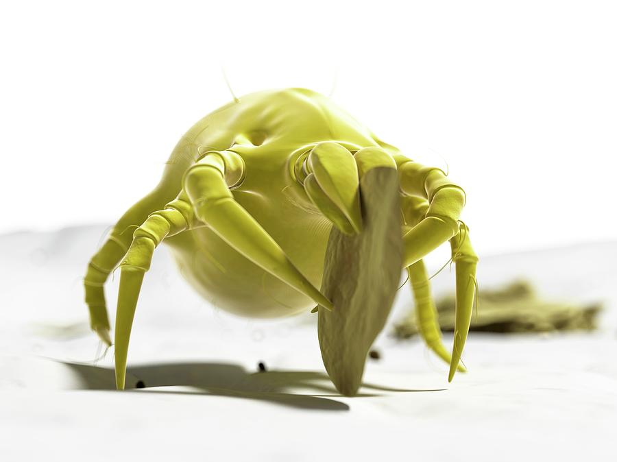 Artwork Photograph - Dust Mite by Sciepro/science Photo Library