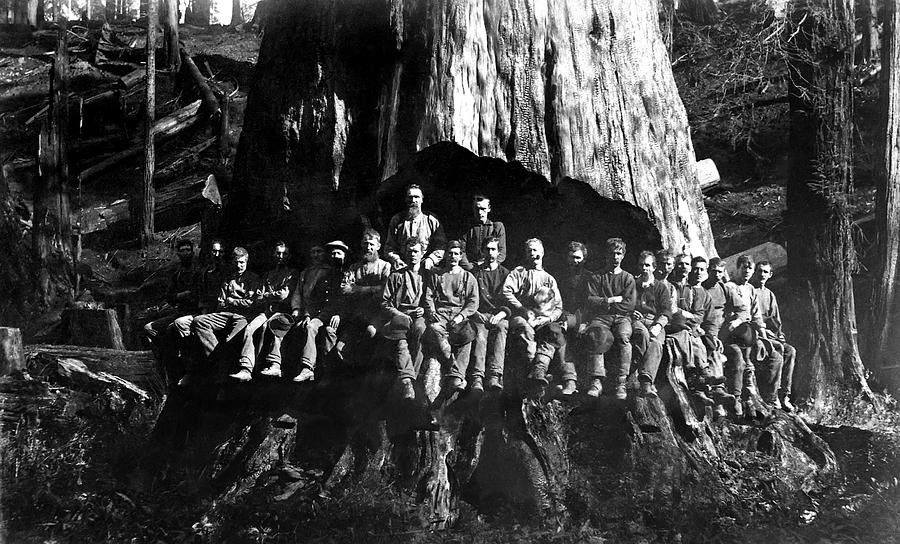 Redwood Photograph - 22 Loggers In Redwood Undercut -- 1884 by Daniel Hagerman