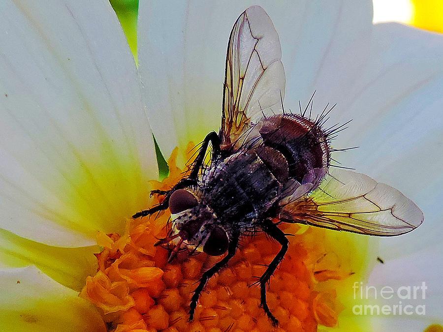 2013 Photograph - 2374-insect On Dahlia by Elvira Ladocki