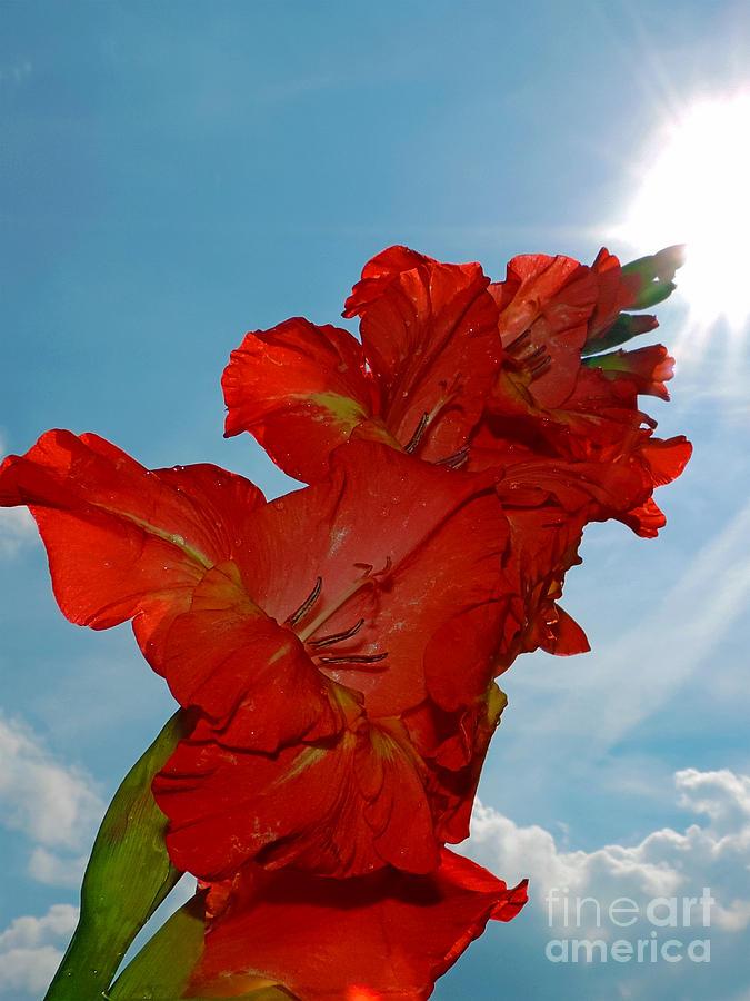 2013 Photograph - 2390-red Flower by Elvira Ladocki