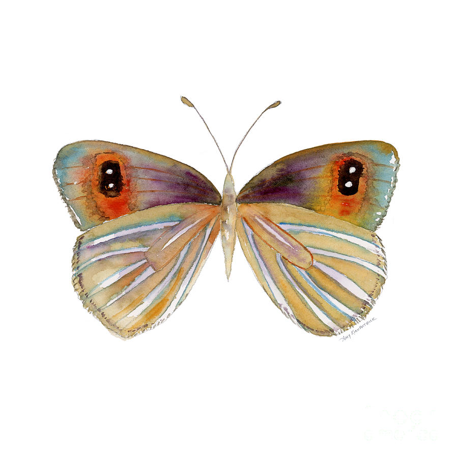 Butterfly Painting - 24 Argyrophenga Butterfly by Amy Kirkpatrick