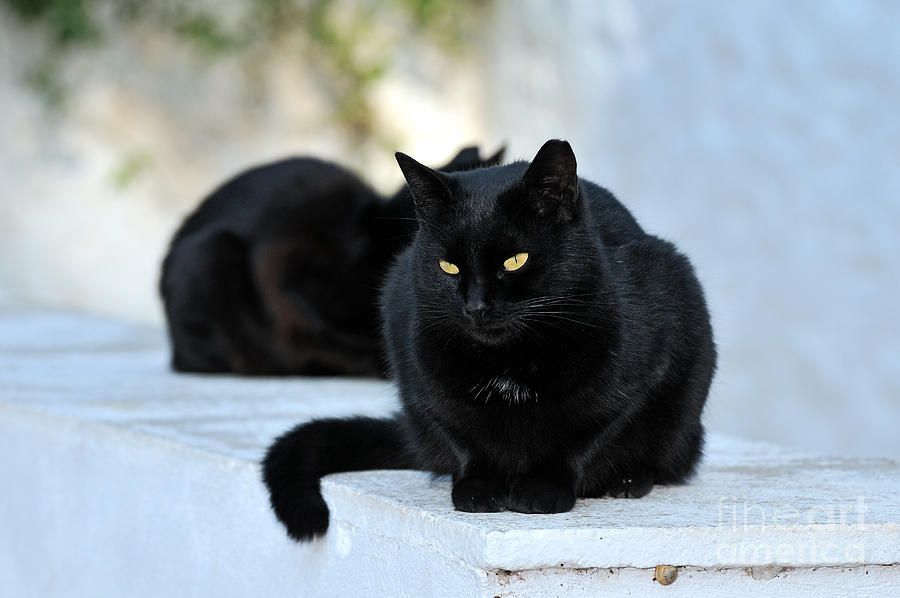 Cat Photograph - Cat In Hydra Island by George Atsametakis