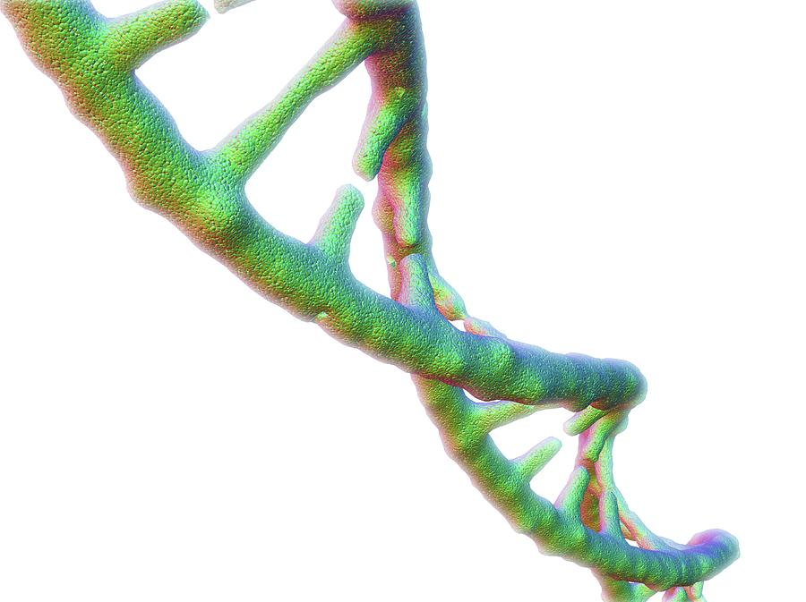 Artwork Photograph - Dna Molecule by Alfred Pasieka/science Photo Library