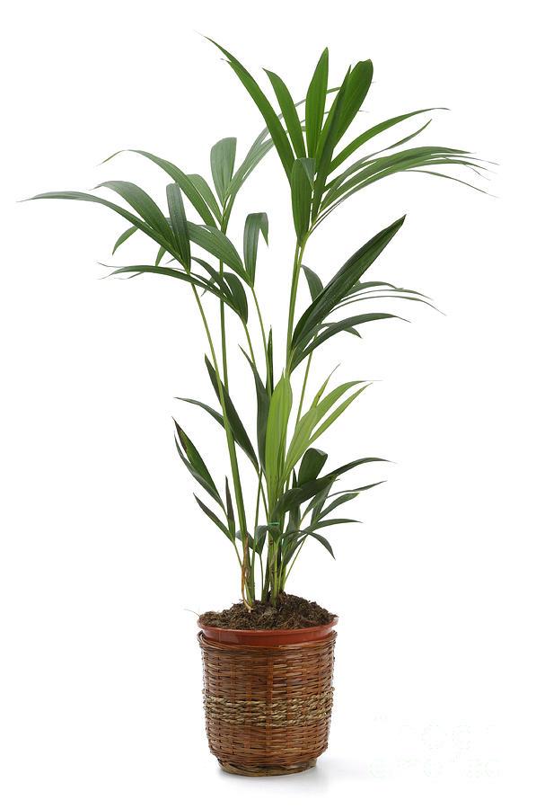 Ornamental Plants Photograph