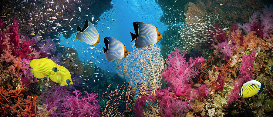 Coral Reef Scenery Photograph by Georgette Douwma