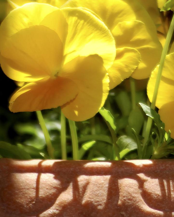 25972 Sedona Flowers 2 Photograph