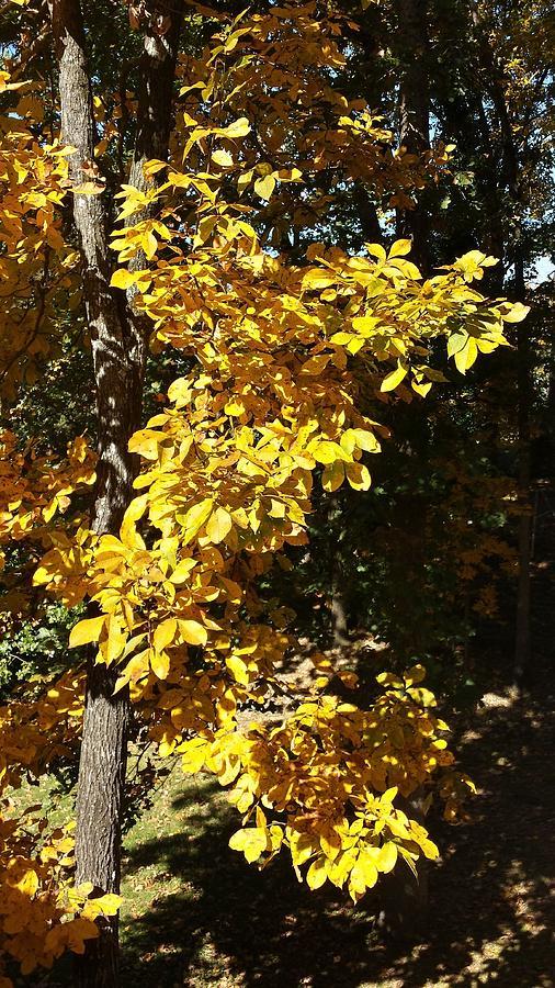 Autumn Color Photograph
