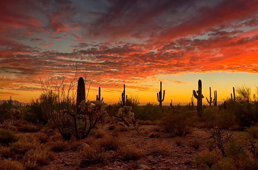 A Southwest Sunset Photograph By Saija Lehtonen