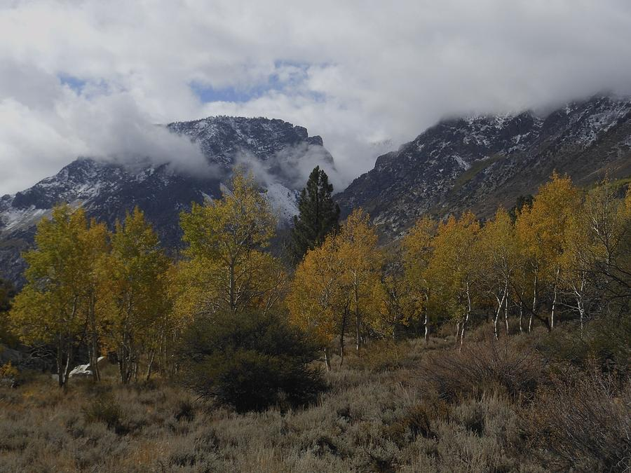Aerie Crag and Aspen Trees by Don Kreuter