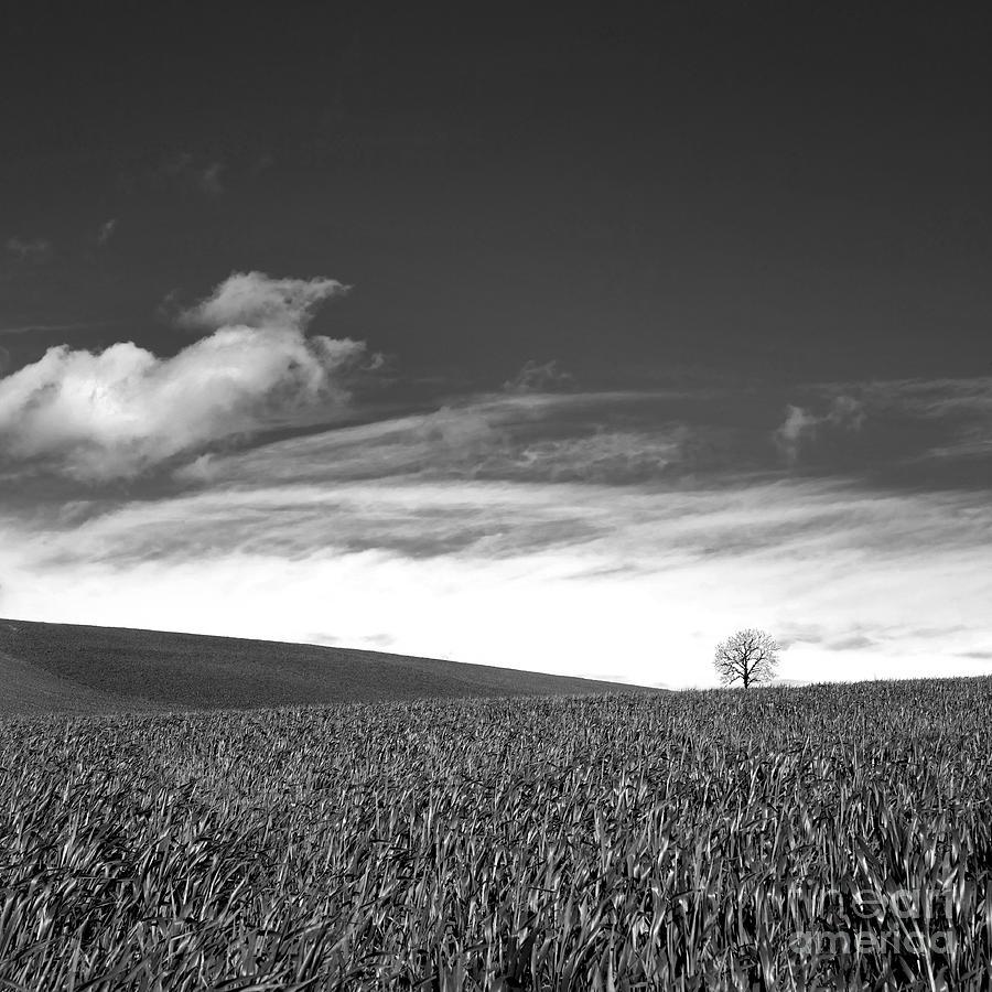 Wheat Photograph - Agricultural Landscape by Bernard Jaubert