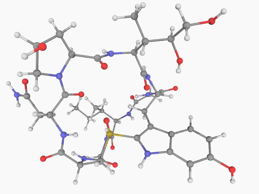 Artwork Photograph - Alpha-amanitin Toxin Molecule by Laguna Design/science Photo Library