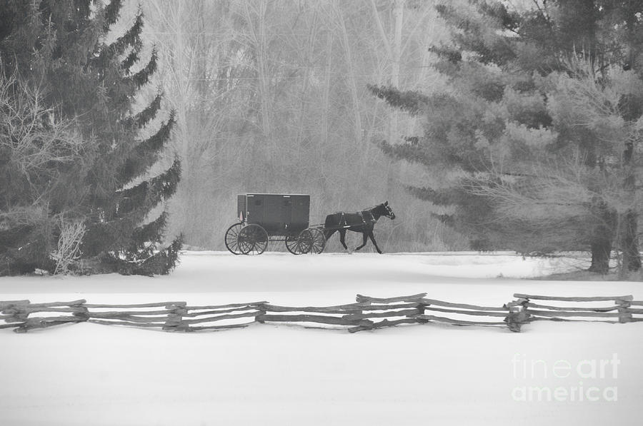 Amish Buggy Photograph - Amish Buggy And Split Rail Fence by David Arment