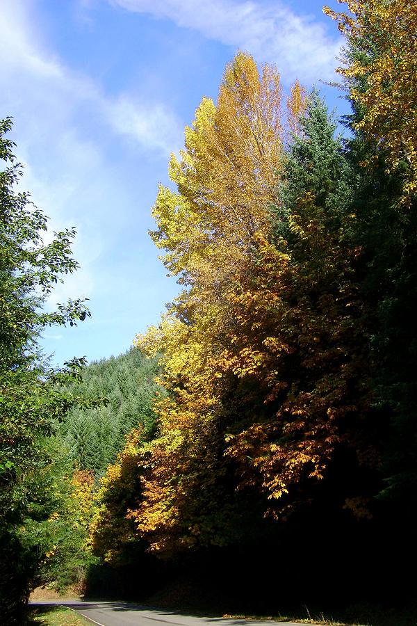 Bloom Photograph - Autumn 2 by J D Owen