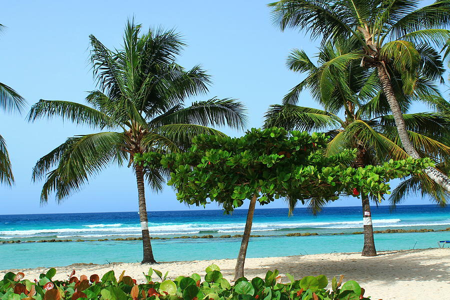 Barbados Photograph - Beach Paradise by Catie Canetti