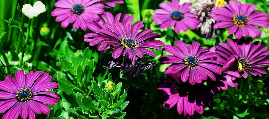 Purple Photograph - Blooms In Bloom by JAMART Photography