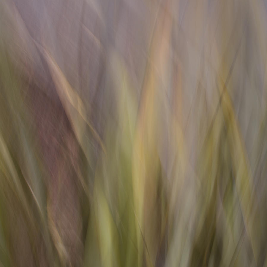 Motion Blur Photograph - Blurscape by Dayne Reast