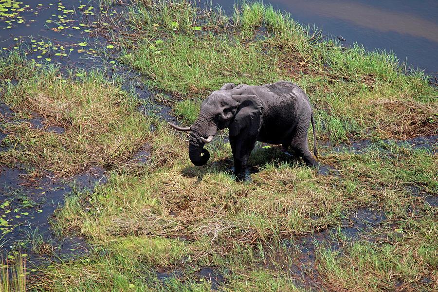 Above Photograph - Botswana, Okavango Delta by Kymri Wilt