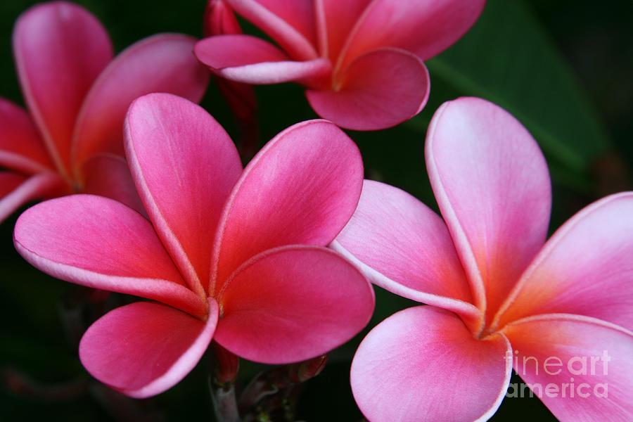 Aloha Photograph - Breathe Gently by Sharon Mau