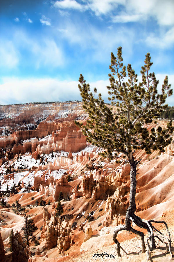 Bryce Canyon Photograph - Bryce Canyon by Marti Green