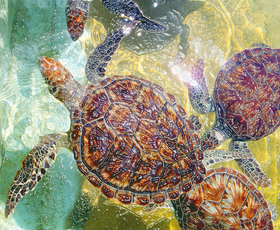 Turtles Photograph - Cayman Turtles by Carey Chen
