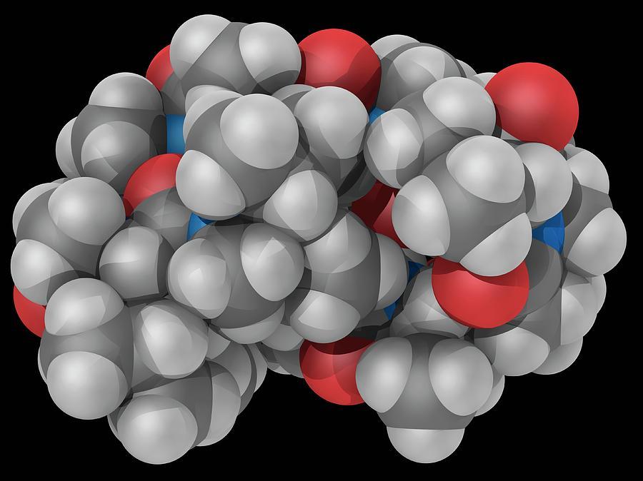 Artwork Photograph - Ciclosporin Drug Molecule by Laguna Design/science Photo Library