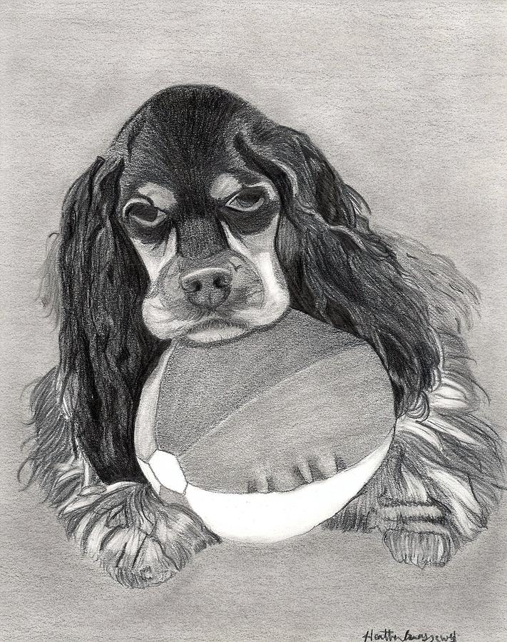 Cocker Spaniel Dog Portrait Drawing by Olde Time  Mercantile