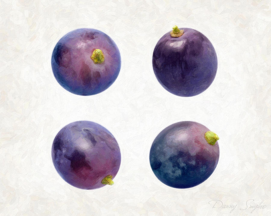 Concord Grapes Painting - Concord Grapes by Danny Smythe