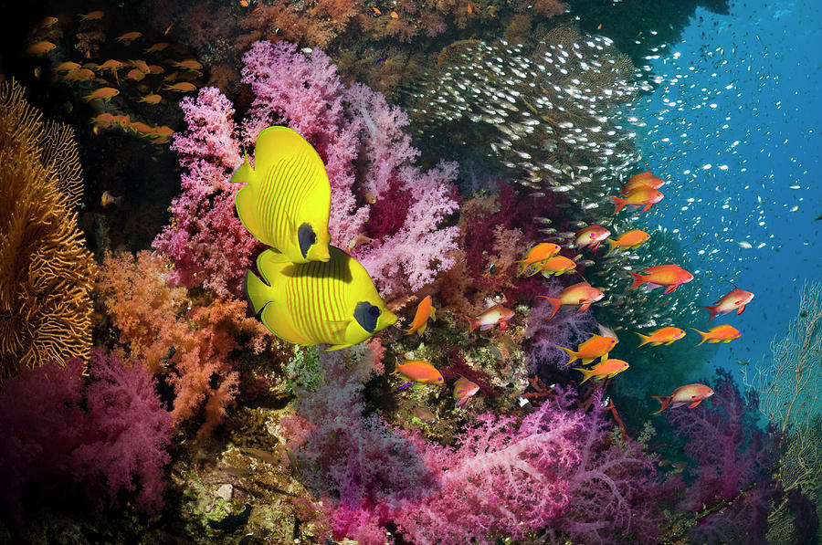 Coral Reef With Fish Photograph by Georgette Douwma