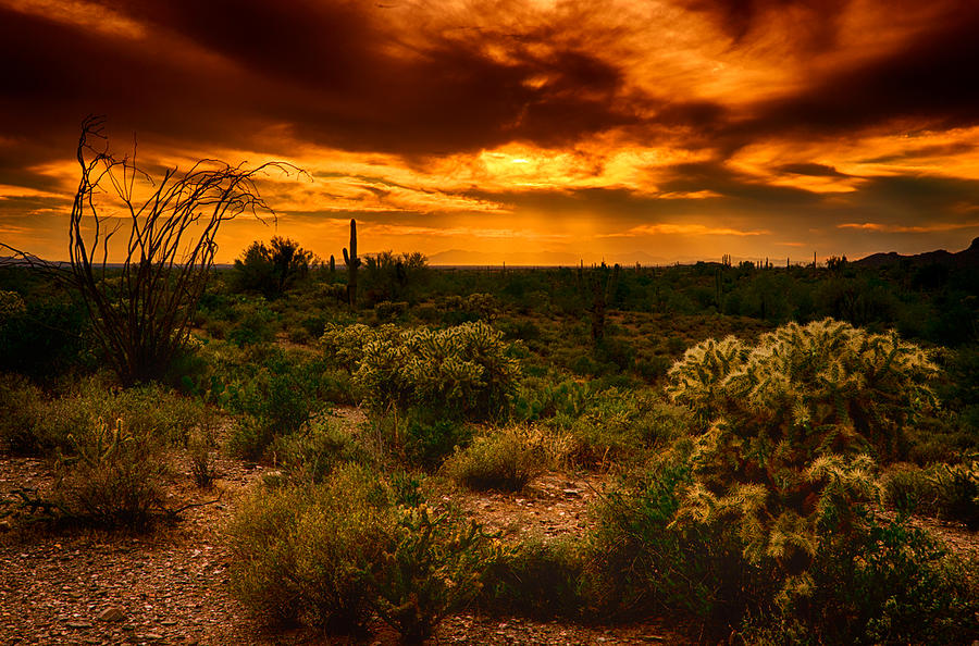 Sunset Photograph - Desert Gold  by Saija  Lehtonen