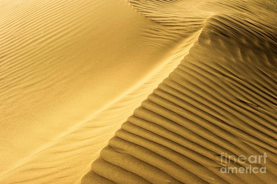 Dunes Photograph - Desert Sand Dune by Ezra Zahor