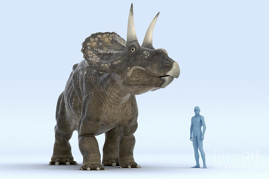 Human Photograph - Dinosaur Diceratops by Science Picture Co