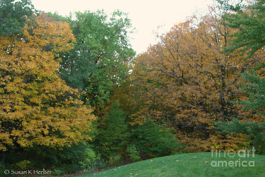 Trees Photograph - Early Autumn by Susan Herber