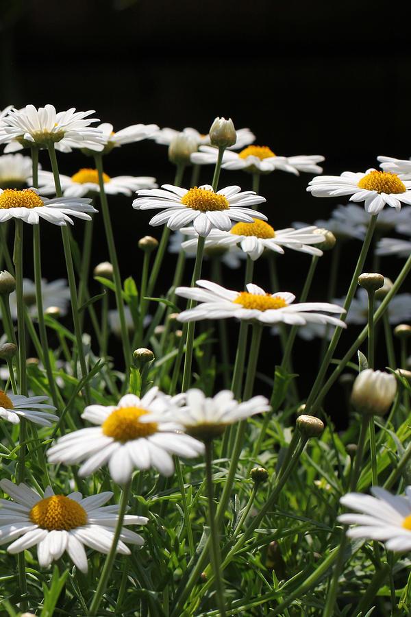 Flower Photograph - Flower by Sanjeewa Marasinghe