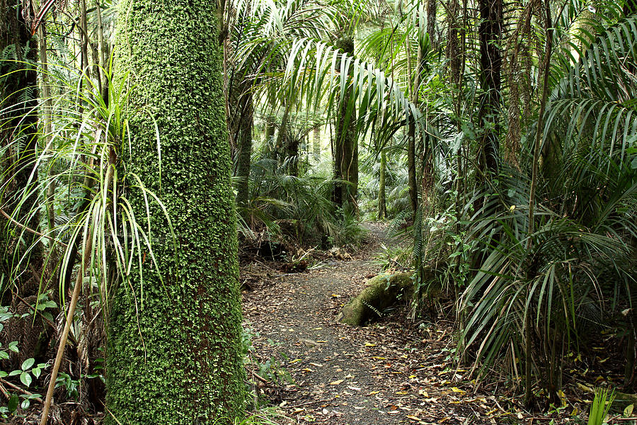 Trail Photograph - Forest Trail by Les Cunliffe