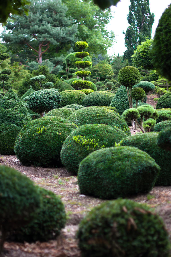 Garden Landscape Topiary Photograph By Frank Gaertner
