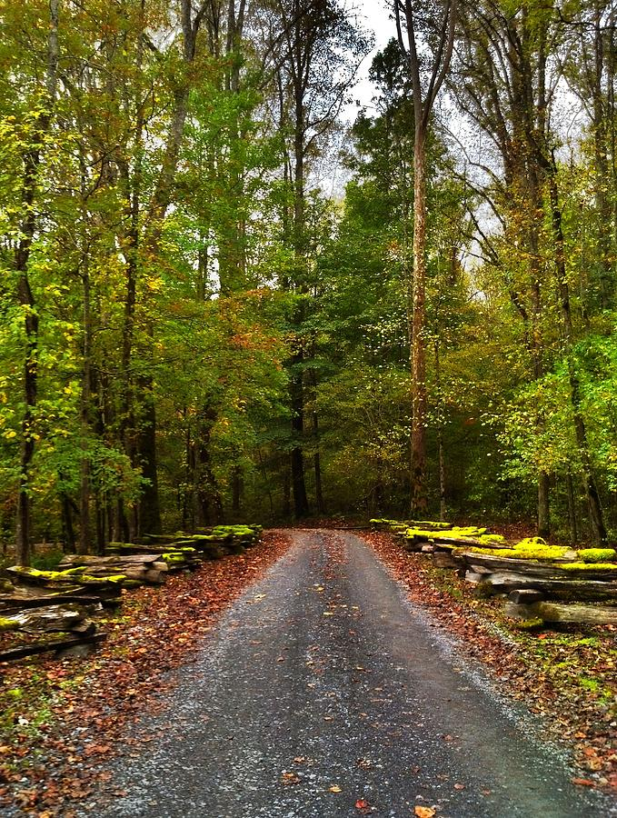 Trail Photograph - Great Smoky Mountains by Janice Spivey