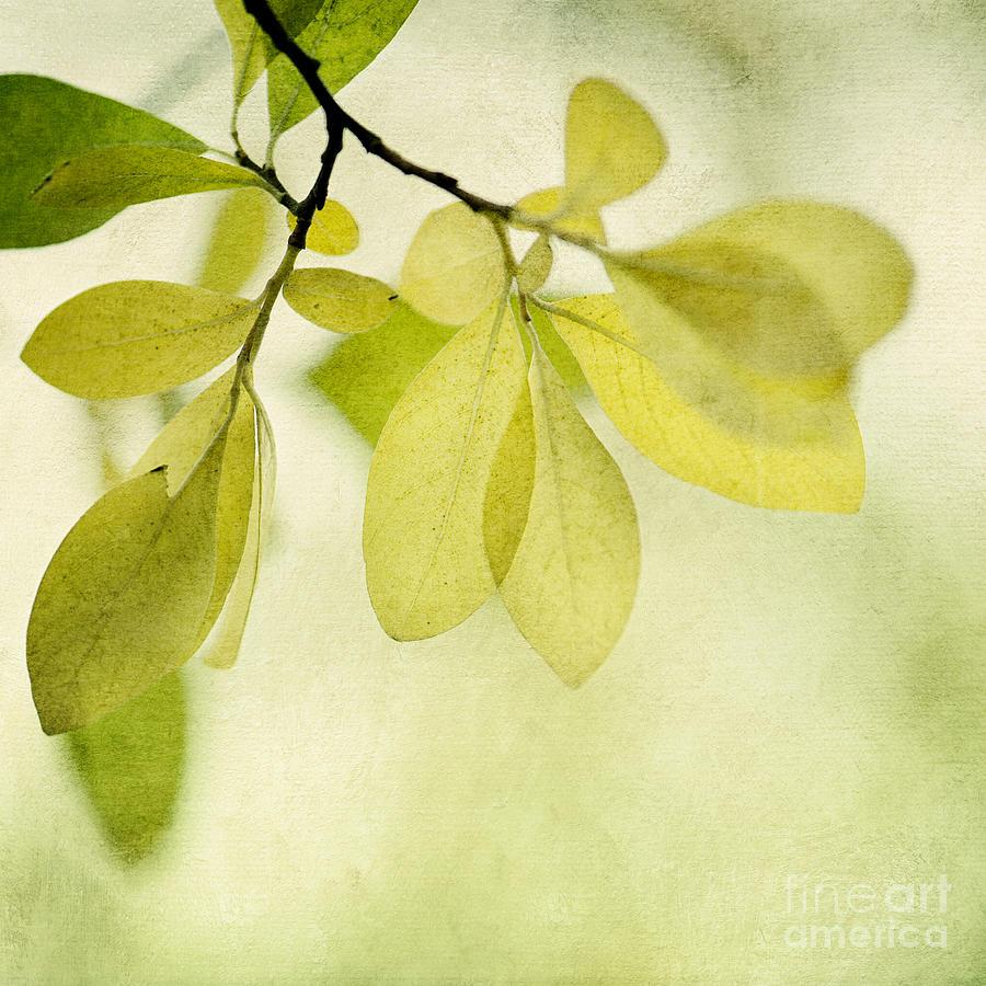 Foliage Photograph - Green Foliage Series by Priska Wettstein