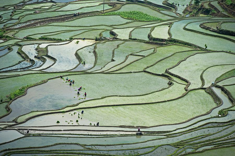 China Photograph - Hani Rice Terraces Near Yuanyang by Tony Camacho
