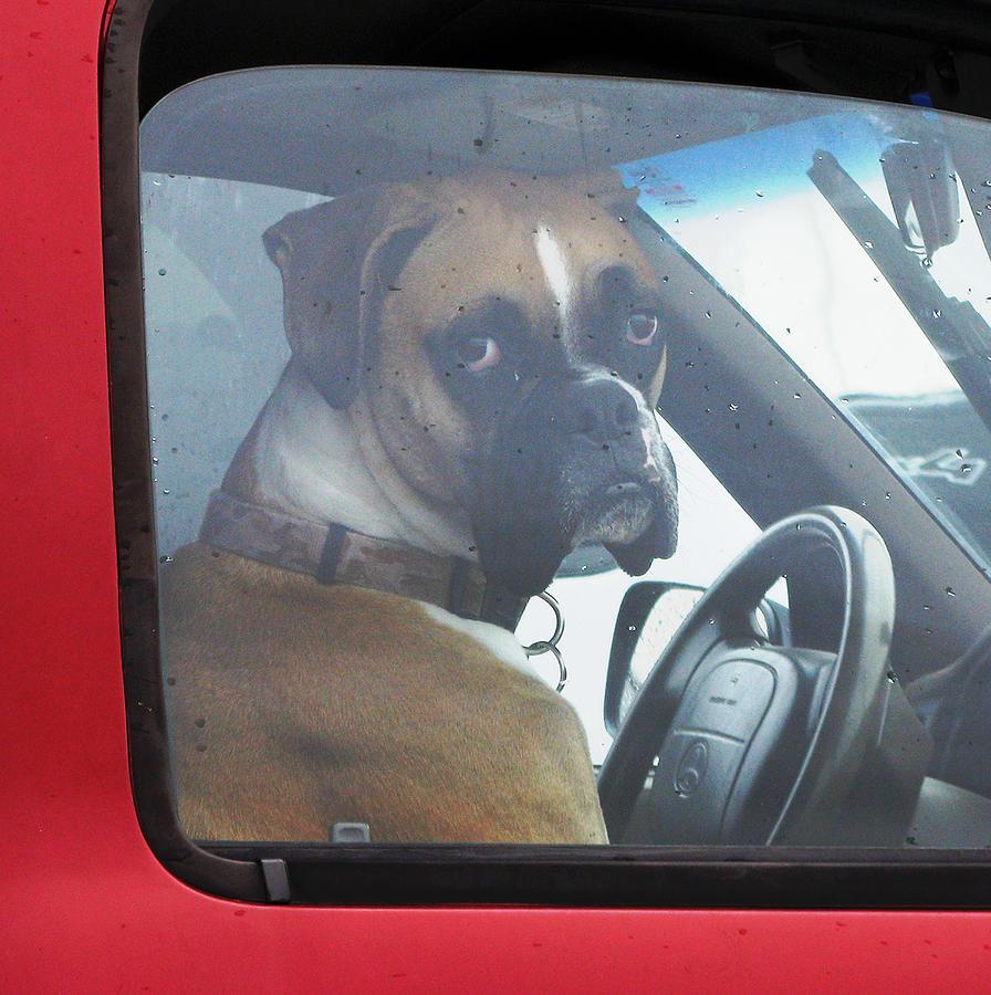 Dog Photograph - Hate Waiting by Patricia Januszkiewicz