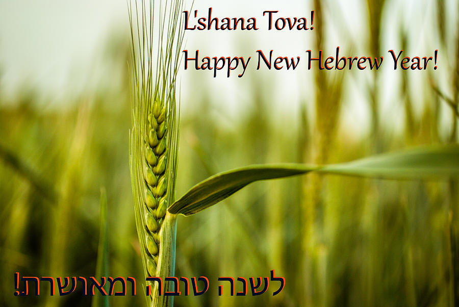 Hebrew new year greetings card photograph by meir jacob agriculture photograph hebrew new year greetings card by meir jacob m4hsunfo
