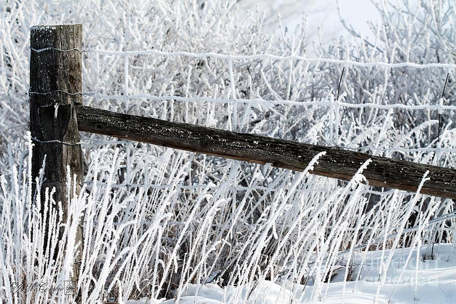 Snow Photograph - Hoar Frost On The Fence by J McCombie