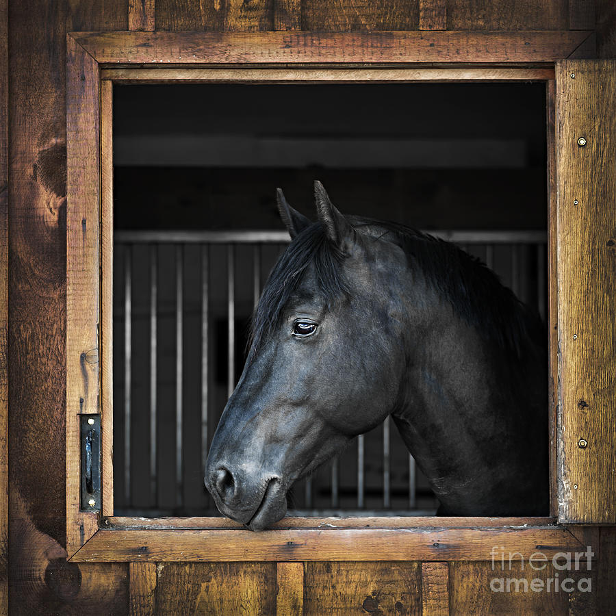 Horse Photograph - Horse In Stable by Elena Elisseeva