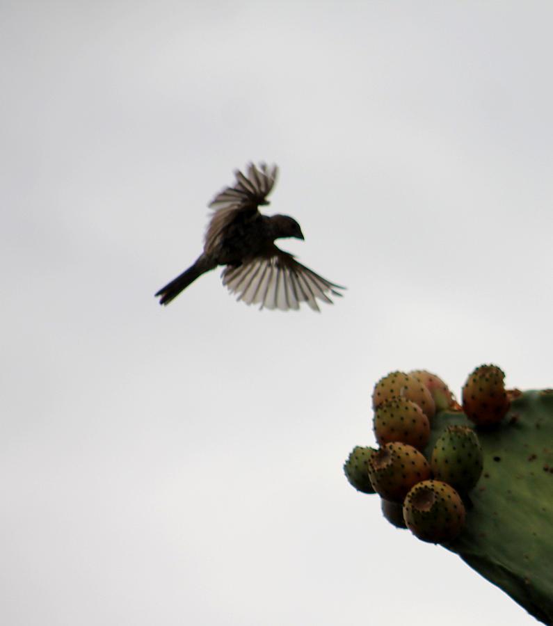 In Flight Photograph