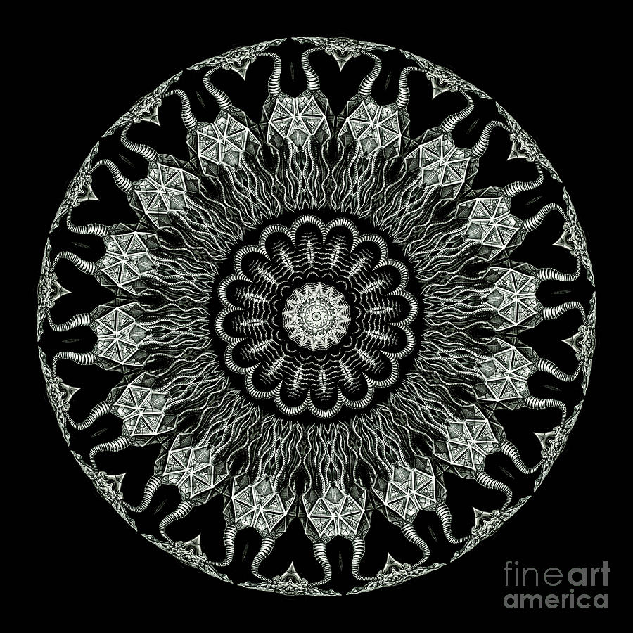 Ernst Haeckel Photograph - Kaleidoscope Ernst Haeckl Sea Life Series Black And White Set On by Amy Cicconi