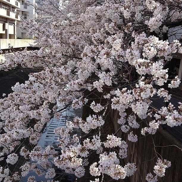 Landscape Photograph - #landscape by Tokyo Sanpopo