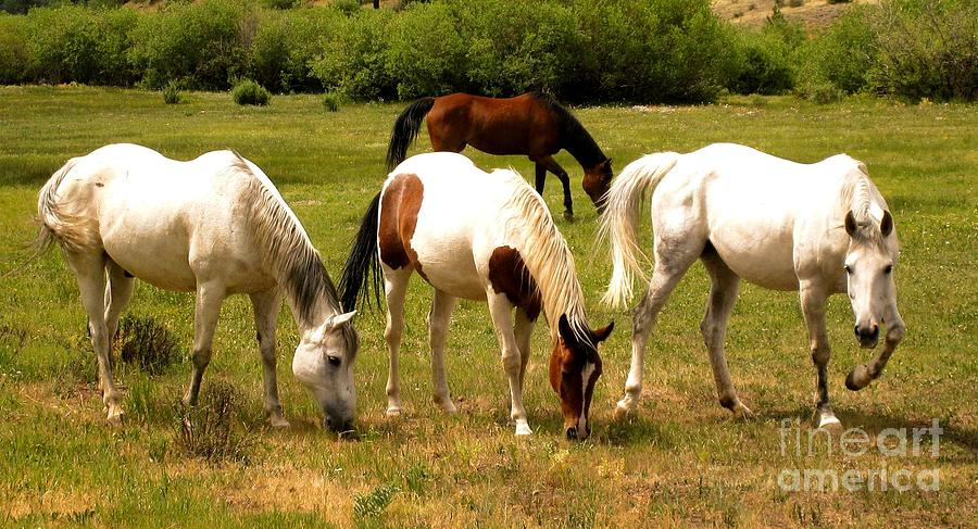 Horse Photograph - Line Dancing At The Coral by Claudette Bujold-Poirier
