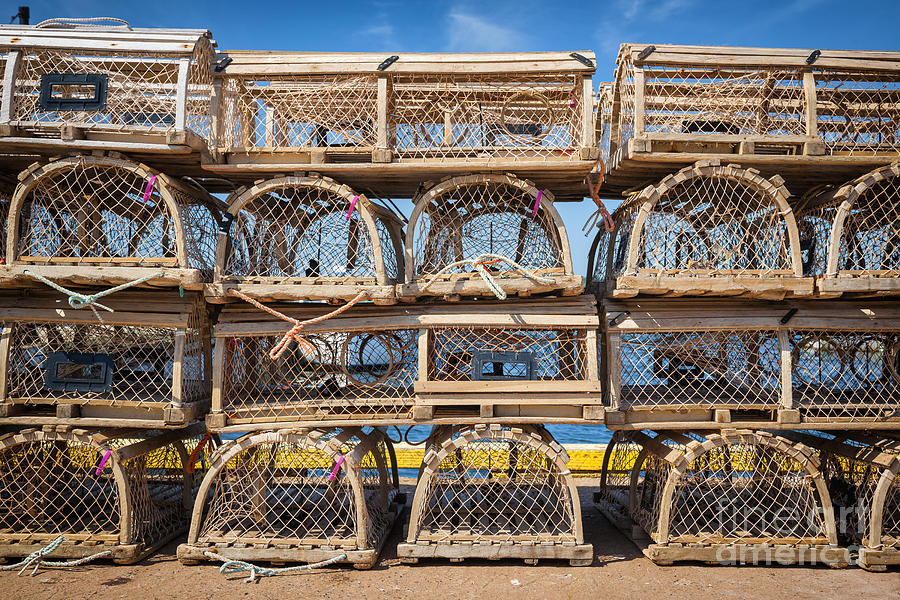Lobster Traps Photograph - Lobster Traps 3 by Elena Elisseeva