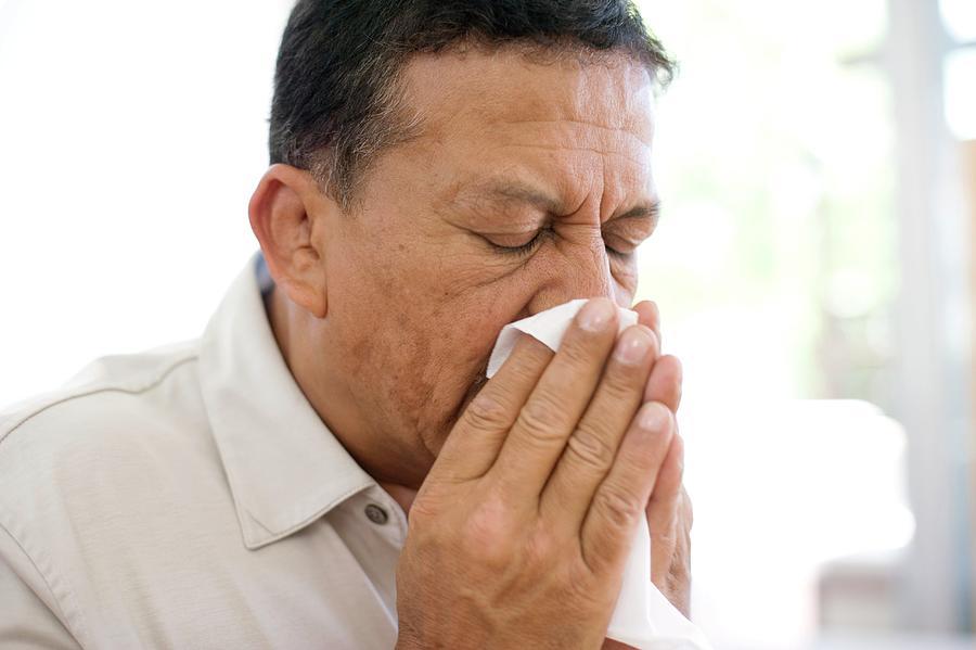 Handkerchief Photograph - Man Sneezing by Ian Hooton/science Photo Library