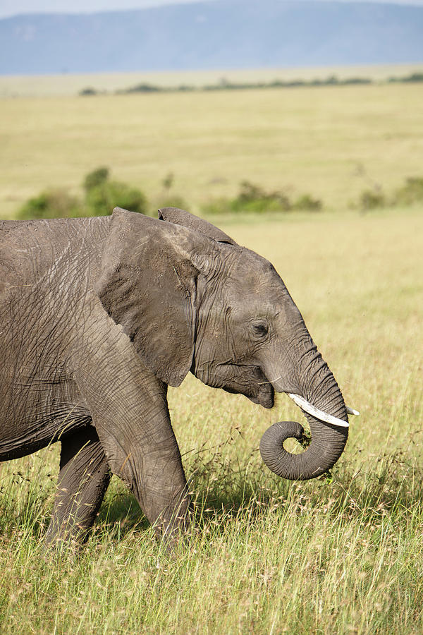 Masai Mara Reserve, Kenya Photograph by Gavin Gough